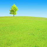 Tree on the hill Royalty Free Stock Images