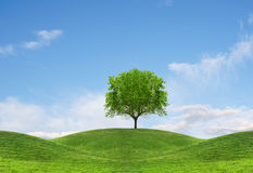 Tree on hill Royalty Free Stock Images