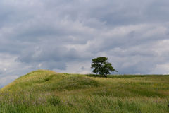 Tree on a hill. The border of Sibiu county in Transilvania, Romania during summer Stock Image