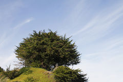 Tree on a Hill. A tree on top of a hill Stock Photo