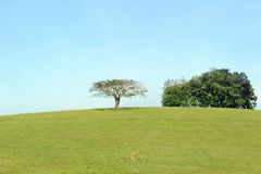 Tree on hill. Tree on small hill with blue sky stock image