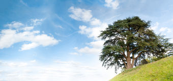 Tree on hill Stock Image