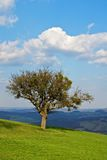 Tree on a hill Royalty Free Stock Image