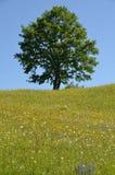 Tree hill Stock Photos