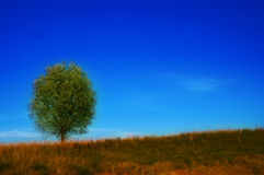 Tree on Hill. Photo of a single, solitary tree on a hillside, against a bright blue sky Stock Photo