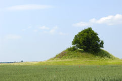 Tree and hill Royalty Free Stock Photography