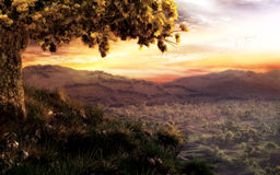 Tree On The Hill. Highly detailed illustration of a tree standing on a hill under warm and cloudy sunset sky Stock Photos