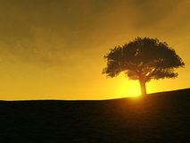 Tree on hill. A tree on a hill during sunset Stock Photos