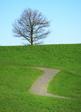 Tree on hill Royalty Free Stock Photo