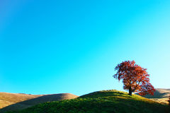 Tree on a hill Royalty Free Stock Images