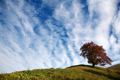 Tree on a hill Royalty Free Stock Photography