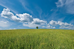 Tree on the hill. Summer landscape with single tree Royalty Free Stock Photo