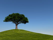 Tree on Hill Against Clear Blue Sky Royalty Free Stock Images