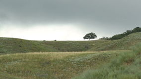 Tree on a hill on a background sky. Tree on a hill on a background cloudy sky stock video