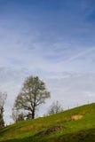 Tree at a hill Royalty Free Stock Image