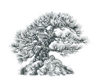 Tree on the hill. Black and white drawing. Illustration of a small bonsai Stock Photography