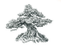 Tree on the hill. Black and white drawing. Illustration of a small bonsai Royalty Free Stock Photo