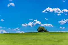 Tree on hill and blue cloudy sky Royalty Free Stock Image