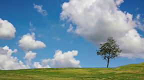 Tree on the hill Stock Photos