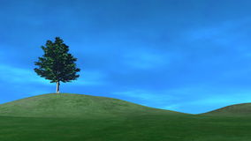 Tree on a Hill, Clouds Rolling By (HD) stock video