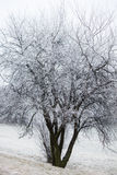Tree on a hill covered with frost Royalty Free Stock Images