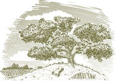 Tree on a hill drawing. Pen and ink drawing of a tree on a hill with a field in the background Royalty Free Stock Photo