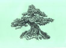 Tree on the hill.Graphics by hand. Coniferous small bonsai on a hillock.  Pen drawing Royalty Free Stock Images