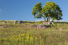 Tree On A hill Stock Photos