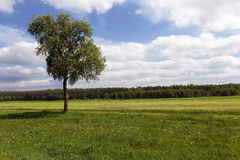Tree on a hill. A tree with green leaves growing on a hill. summer Stock Photos
