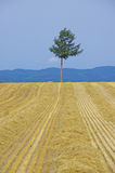A tree on a hill Stock Photography