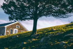 Tree on Hill by House Royalty Free Stock Images