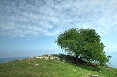 Tree on the hill. Lonely tree on the hill Royalty Free Stock Photos