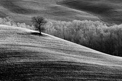 Tree on a hill Stock Image
