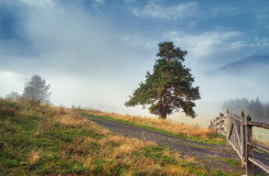 Tree on the hill mountain fog Royalty Free Stock Photo
