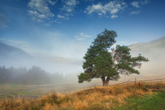 Tree on the hill mountain fog Stock Photography