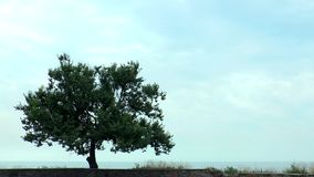 A tree on the hill near the sea stock footage