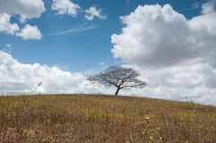 Tree on Hill Stock Photography