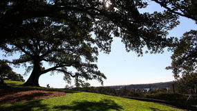 Tree on hill overlooking town Royalty Free Stock Photos