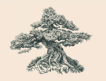 Tree on the hill. Pen drawing. Illustration of a small bonsai Royalty Free Stock Photo