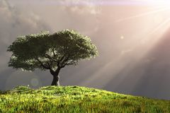 Tree on hill with rays of light royalty free illustration