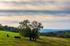 Tree on a hill in rural Lancaster County, Pennsylvania. Royalty Free Stock Photos