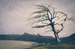 Tree on a Hill with Snow Top Mountain Background in New Zealand with Vintage Colour Effects Stock Photo