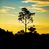 Tree on hill with sunset Royalty Free Stock Photography