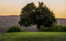 Tree on a hill at sunset Royalty Free Stock Photo