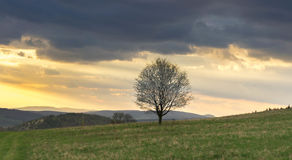 Tree on hill during sunset Stock Image