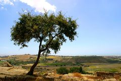 Tree on hill top. Lonely tree on hill top on the Island Sicily-Italy Stock Photo