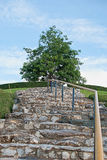 Tree and hill. Tree up in the hill with stone stairway Stock Photos