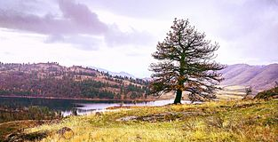 Tree on a hill. Water lake grass pine sky outdoor  cloud Royalty Free Stock Photography