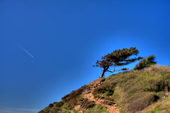 Tree on hillside Royalty Free Stock Images