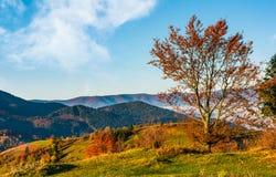 Tree on hillside on autumn mountains Stock Photography